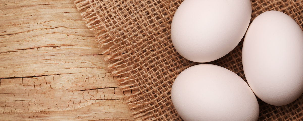 ovo e suas proteínas